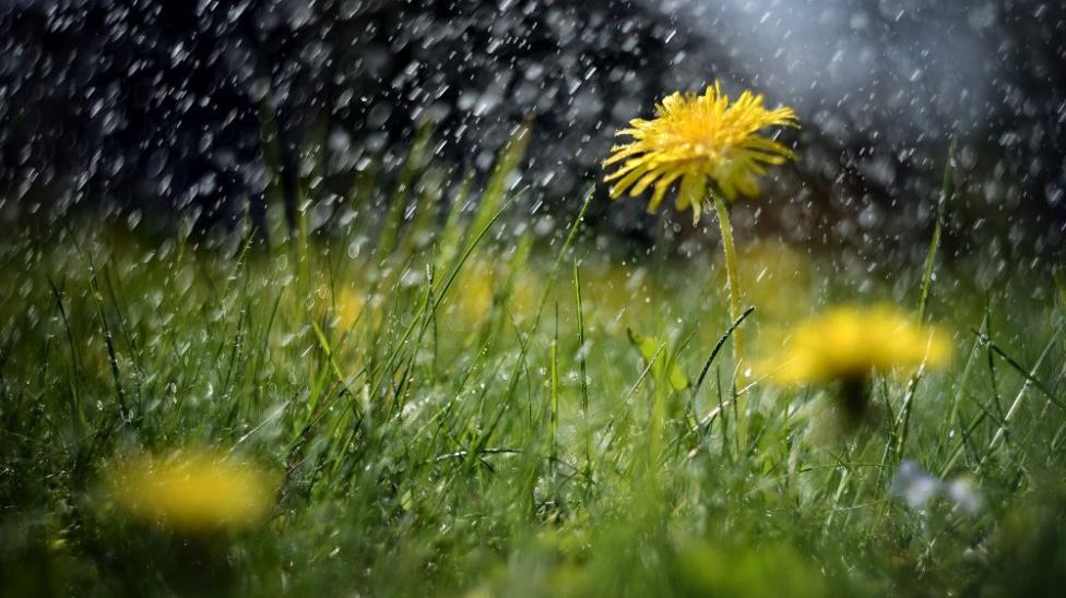 - На Илинден селските стопани у нас правят молебени за дъжд.