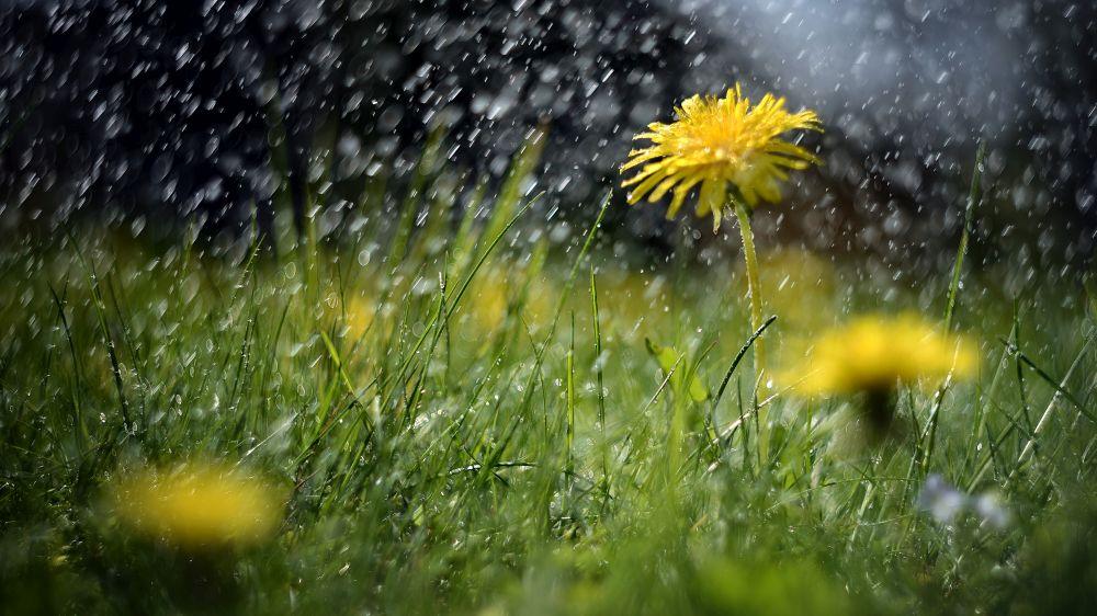 На Илинден селските стопани у нас правят молебени за дъжд.