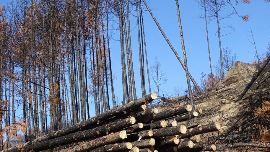 Назначиха временен директор на Агенцията по горите