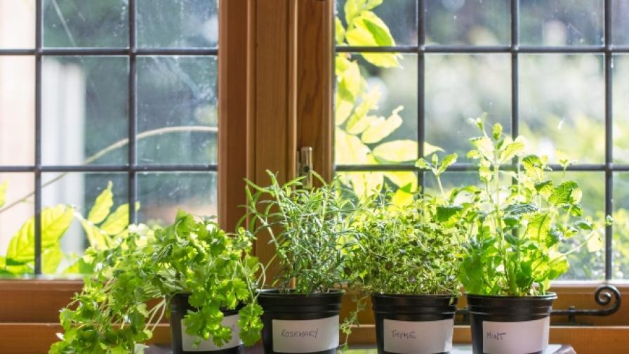 7 растения, които да отгледате в кухнята (СНИМКИ)