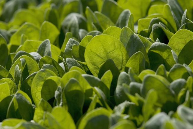 Спанакът е богат на витамин В6, като освен това съдържа голямо количество витамини К и А.