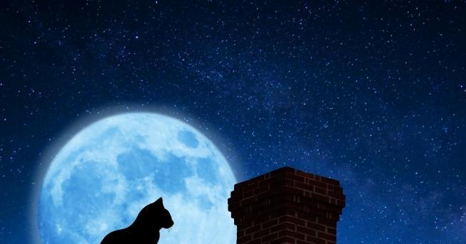 Котките са божествени и царствени създания, които все пак успяват