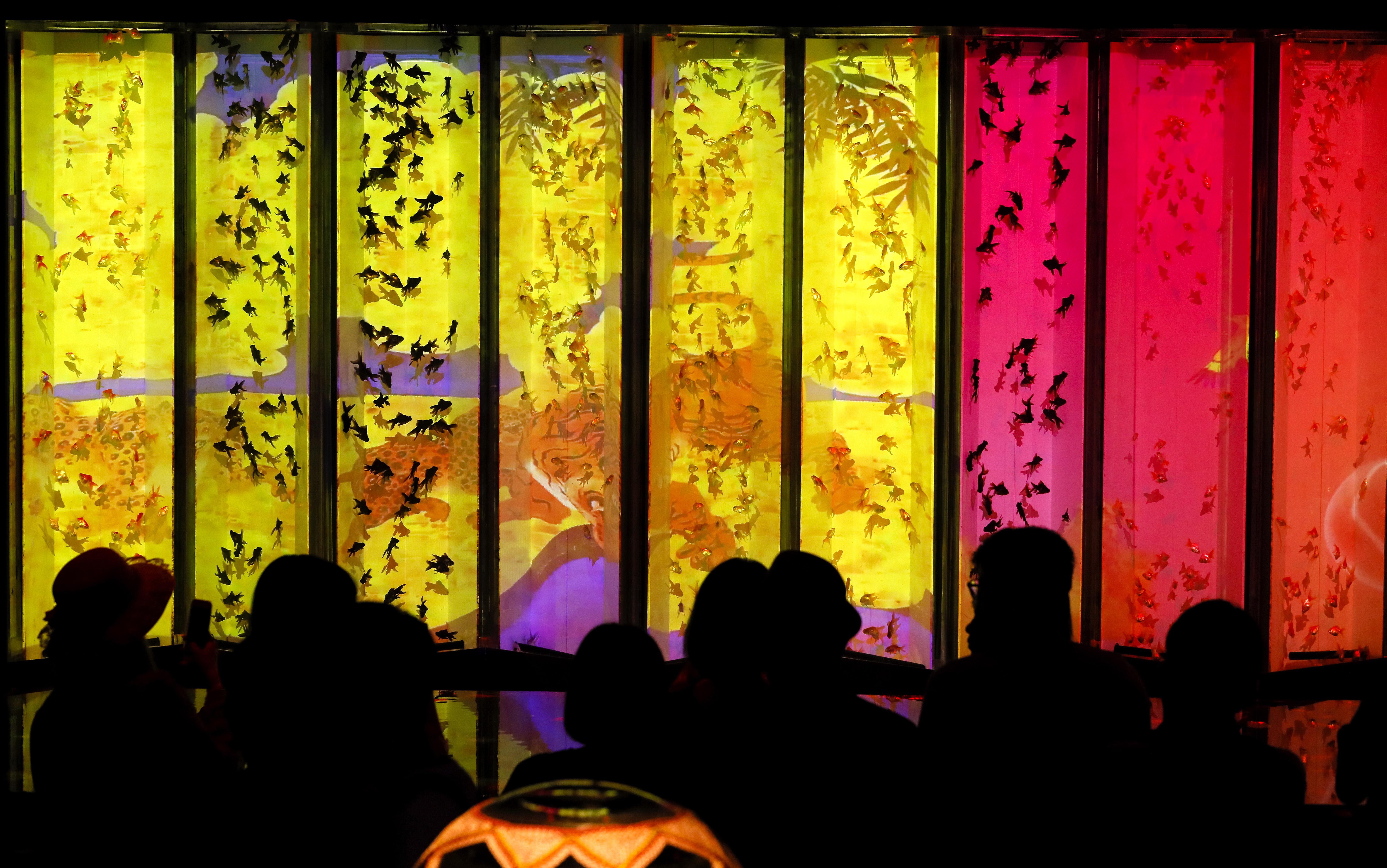 В аквариума в Нихонбаши, централен район на Токио, Япония са показани около 8 000 златни рибки