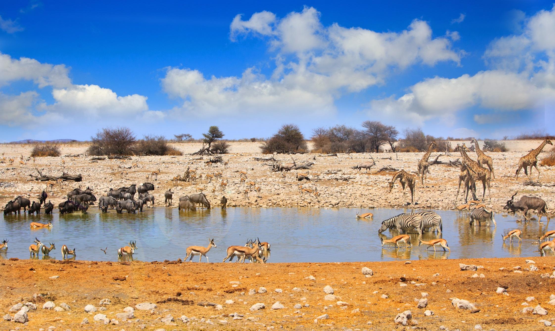 Национален парк Етоша, Намибия<br /> <br /> Докато Намибия отстъпва на съседните си страни, които могат да предложат гъста дива природа, тя предлага прекрасни наблюдения на пустинни видове, както и може би най-добрия шанс да бъде наблюдаван емблематичния гепард в действие. Без съмнение национален парк Етоша е звездата, но е доста посещаван по време на сухия сезон (от юли до септември), когато дивата природа се концентрира около малките водни басейни. Достъпни лагери и добре поддържани пътеки позволяват сами да шофирате по време на сафарито, а около осветени водни басейни имате отлична възможност за нощно наблюдение на лъвове, хиени и дори черен носорог.