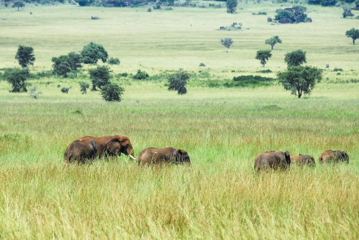 Национален парк Долина Кидепо, Уганда<br /> <br /> Националният парк Долина Кидепо може да бъде най-красивия национален парк в цяла Африка. С вълшебните равнини на долините Кидепо и Нарус, засенчени от планинския връх Морунголе, този парк има огромна привлекателност заради природата сама по себе си. Като прибавим към това и наблюденията на животни и малкия брой посетители – имаме победител.