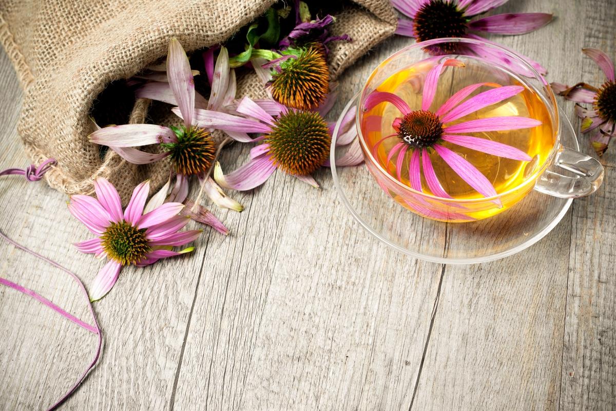 Ехинацея - чаят от нея е мощен имуностимулант, който е особено полезен за предстоящата есен.