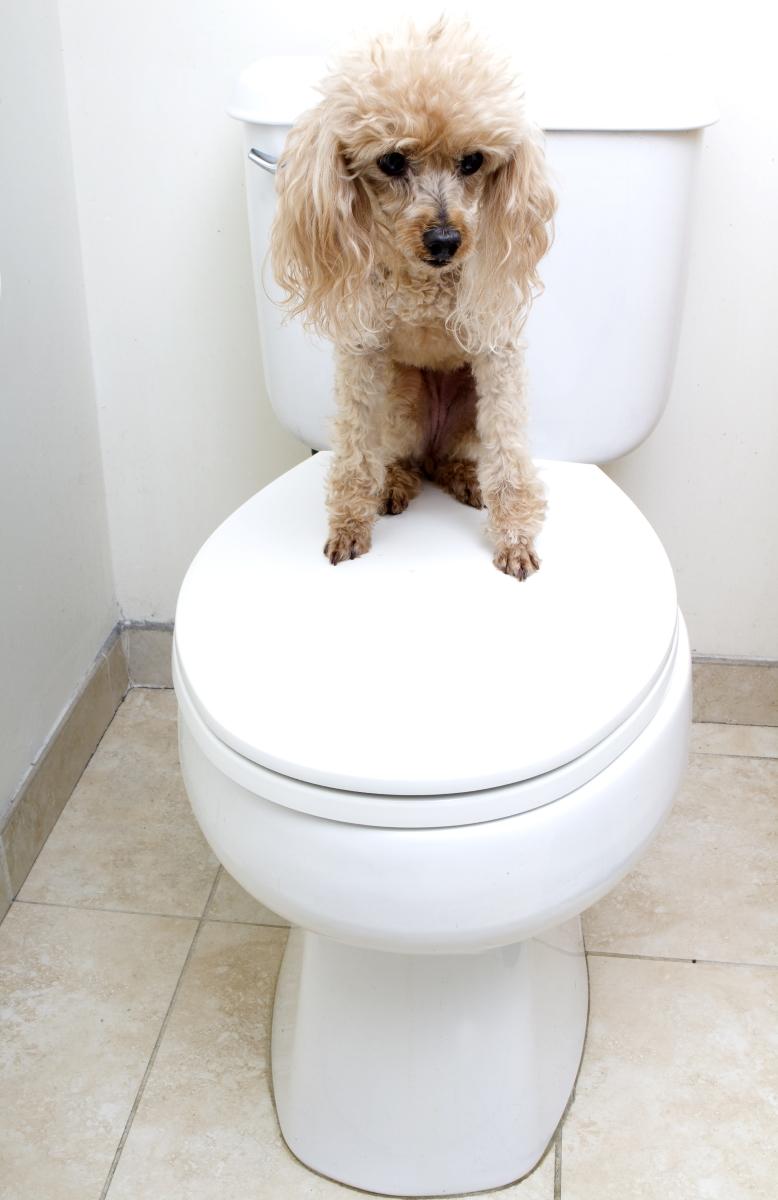 Защо кучето ви идва с вас до тоалетната? Теориите са две - едната е, че тъй като то е стадно животно, не може да остане само и предпочита да ви последва. Другата - че докато сте в тоалетната, то всъщност ви пази. Връща ви жеста, че вие правите същото за него, докато е в тази деликатна ситуация в парка.