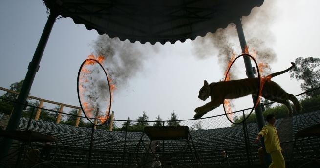 Ужасяваща гледка се разкрива пред очите на посетителите на цирка