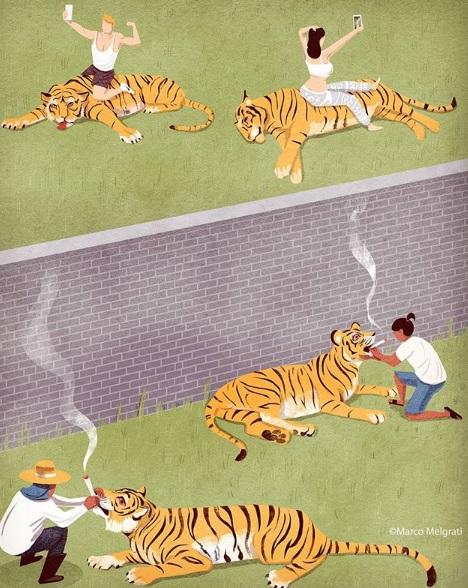"""""""THAIger"""". Слухове твърдят, че в някои зоологически градини тигрите биват дрогирани, за да стоят тихи и да не притесняват посетителите"""", пише Марко Мелграти."""