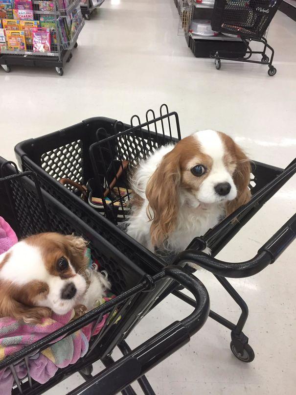 Две сладки кученца и една случайна среща.