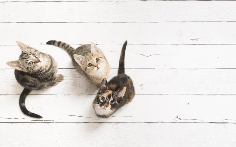 котки котка