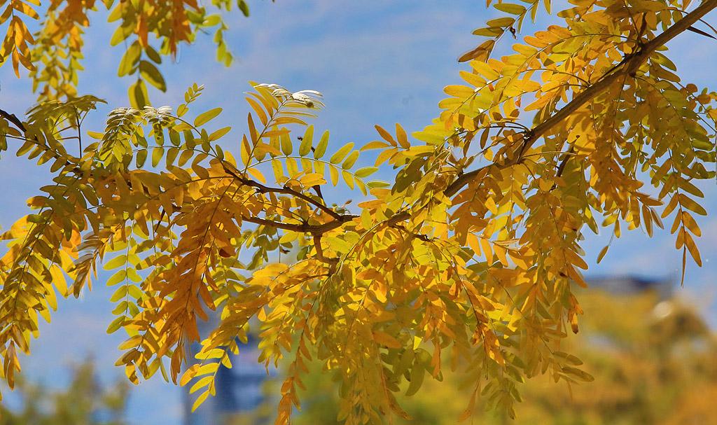 Топли есенни дни в софийските паркове