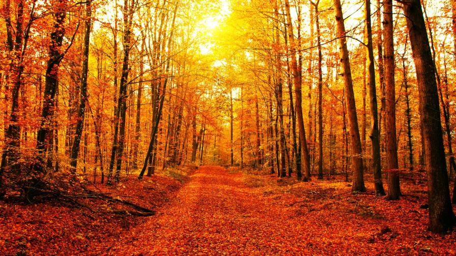 <p>Ноември започва със слънце и пролетни температури</p>