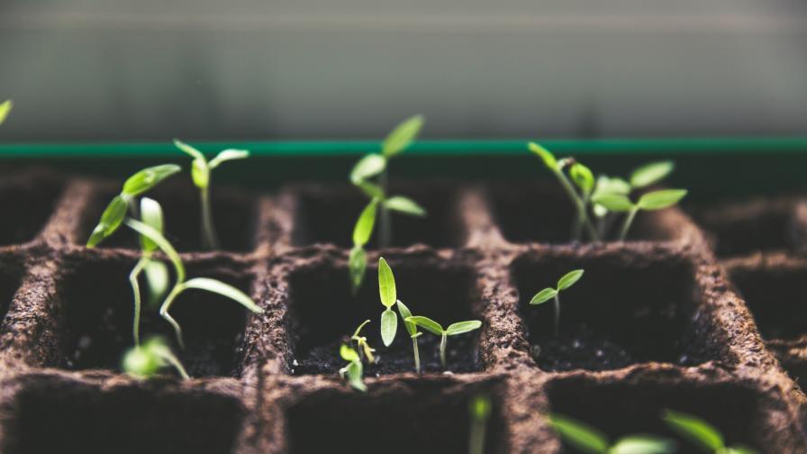 Науката не е в състояние да спаси жизненоважни растения