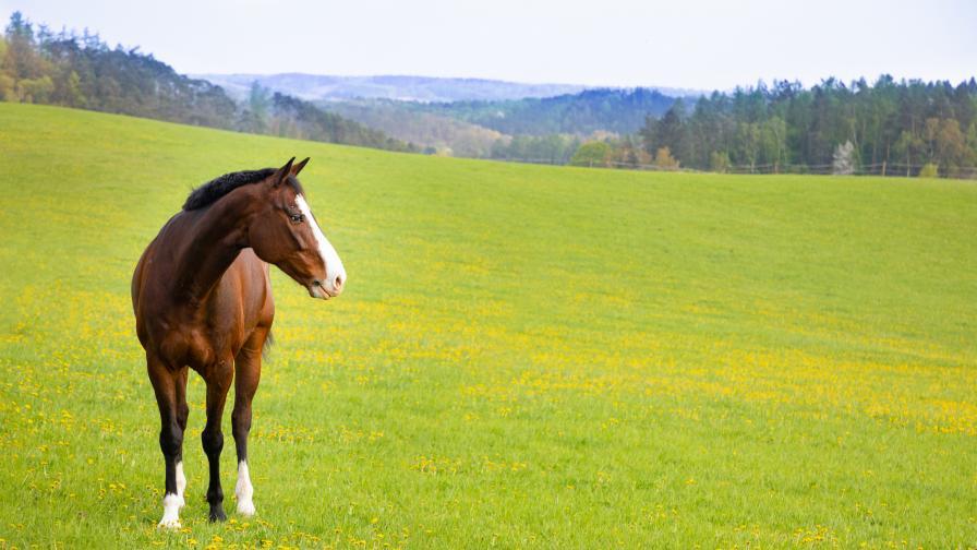 Откриха осем простреляни коне в Калугерово