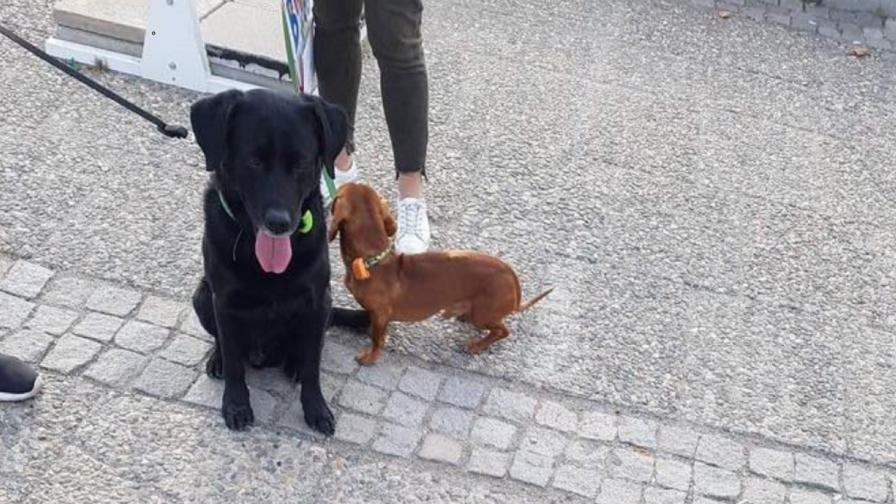 Защо тези кучета от София взривиха мрежата за един ден