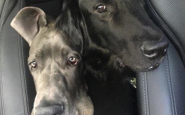 Григор се забавлява с гигантските кучета на Агаси