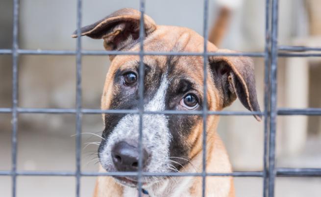 Общински приют – концлагер за кучета