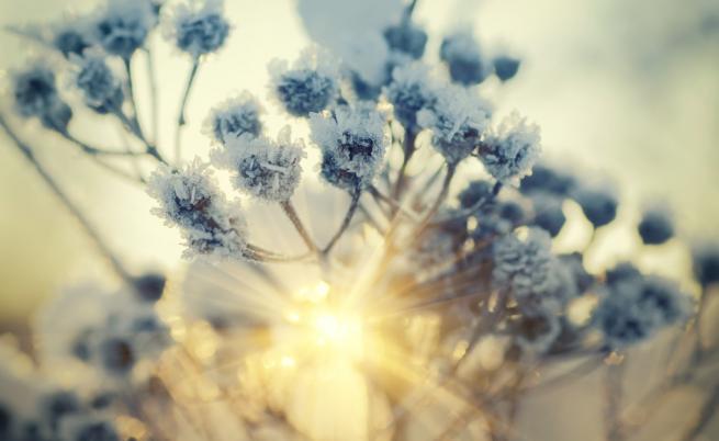 Слънце и пролетно време до края на седмицата