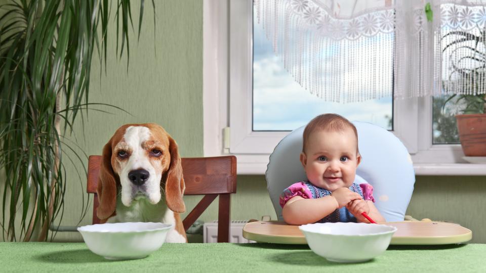 Животните не са деца и децата не са животни