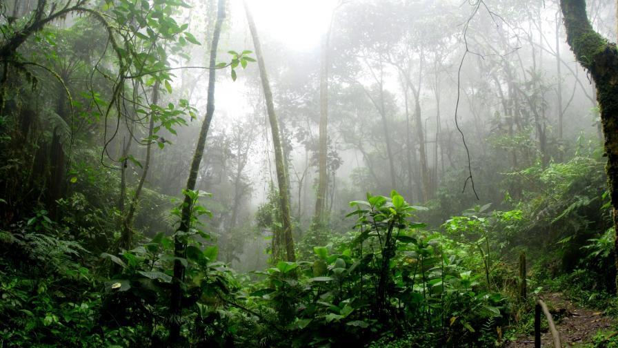Амазонските джунгли