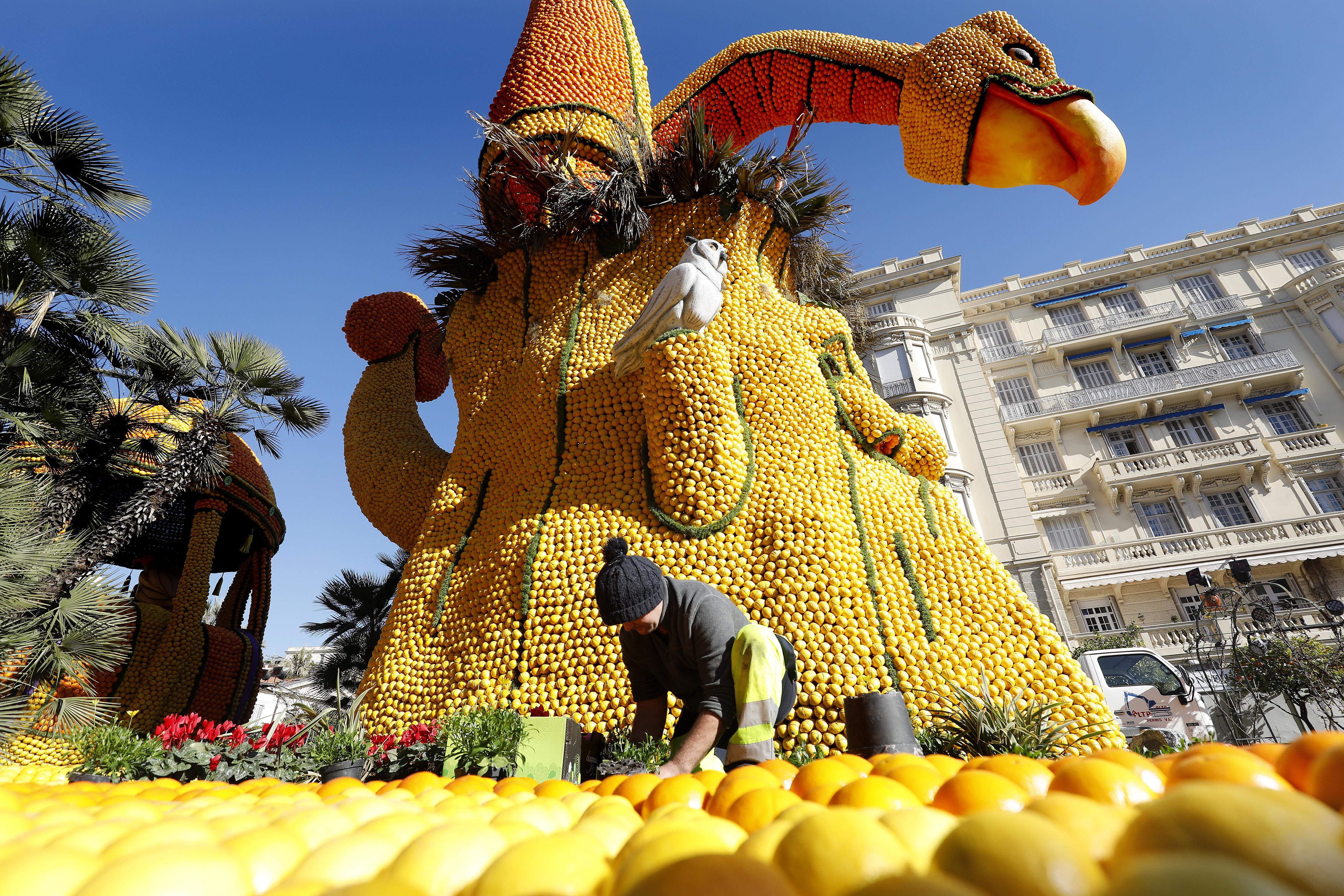 Програмата на Фестивала включва изработване на гигантски статуи от портокали и лимони, шествия с маскирани малчугани, танци, музикални изпълнения и още много други прояви