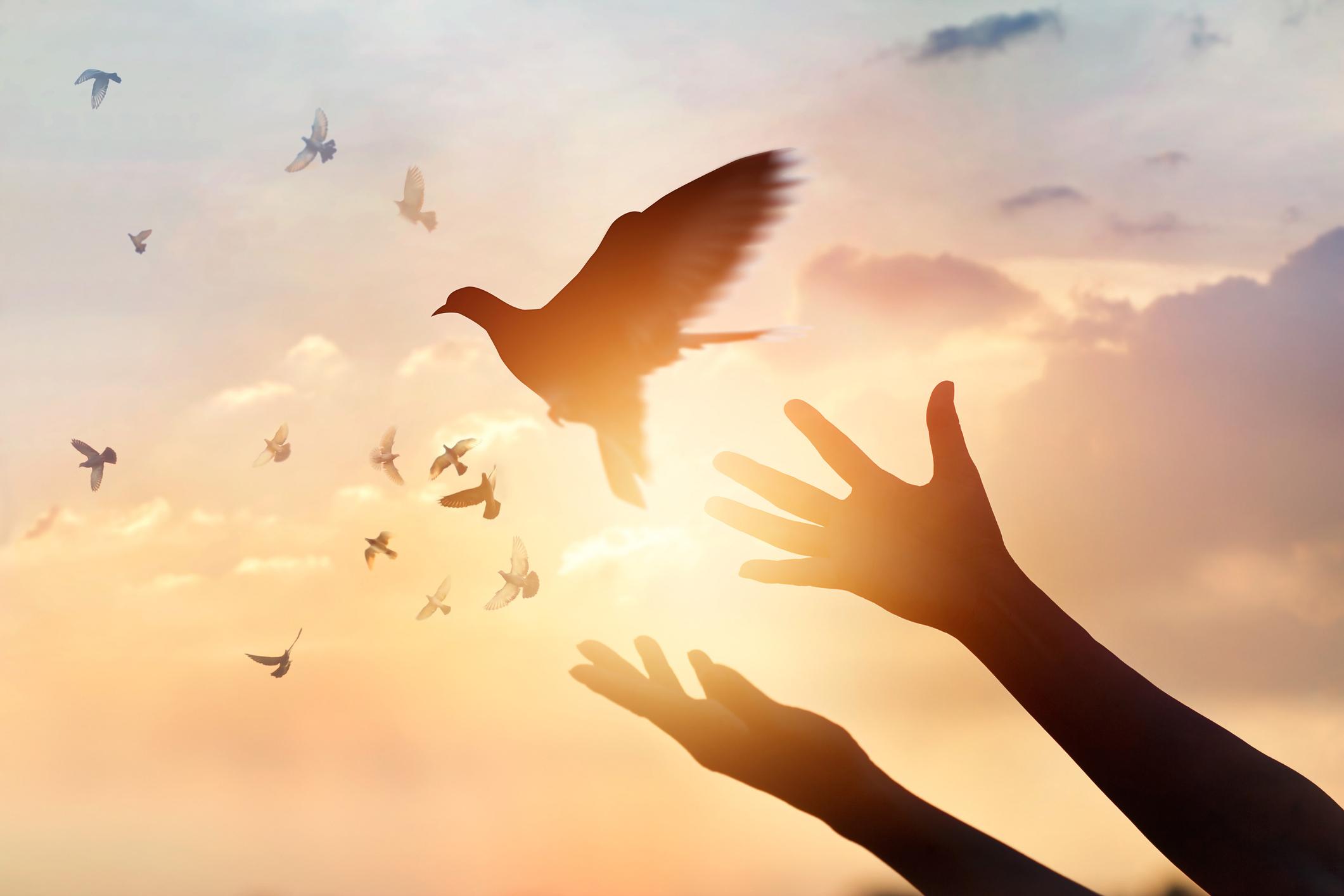 Гълъб: 1-31 август<br /> Родените през август са търпеливи и кротки, докато някой не ги засегне, било с думи или с действия. Те държат много на своето семейство, на близките и приятелите