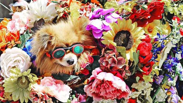 куче цветя