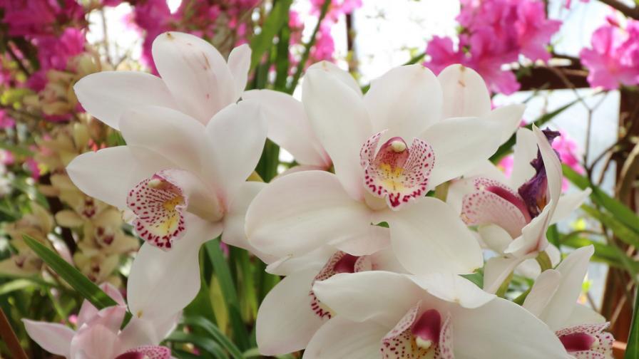 <p>Истината за цената на цветята</p>