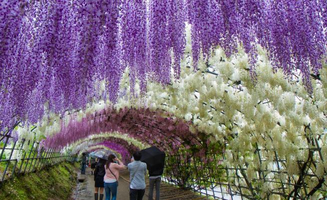 Райската градина Фуджи - място, извадено от приказките