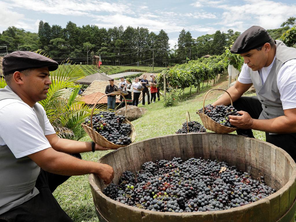 В град Сао Роке, чиито първи лозови масиви датират от 17-ти век , производството се простира на 307 километра площ и има 90 000 жители, заети във винената промишленост.