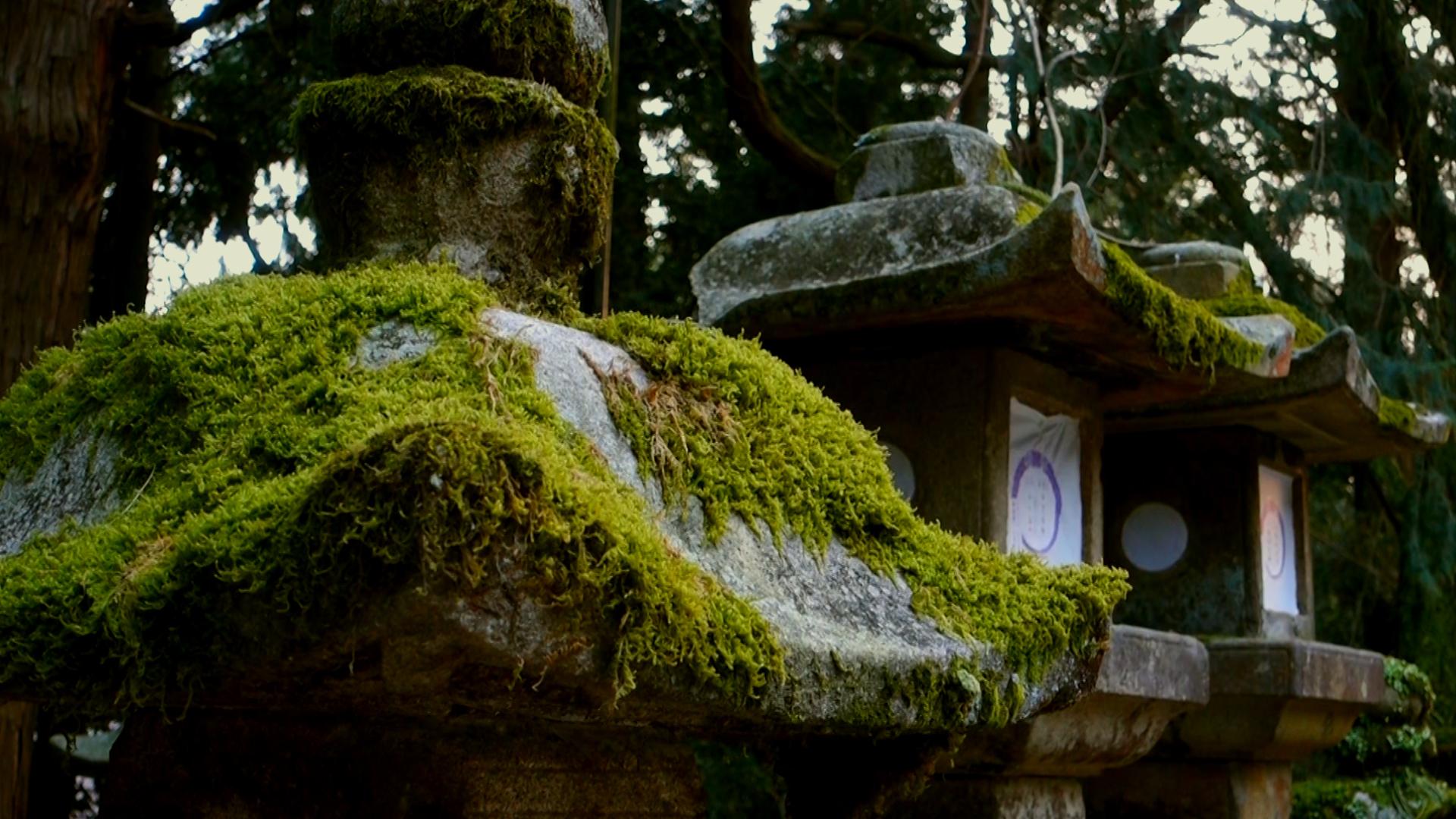 Свещените гори на Япония