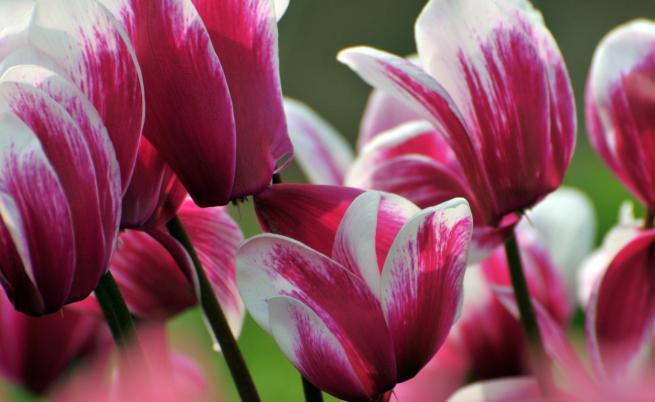 Как да се грижим за това красиво и капризно цвете вкъщи