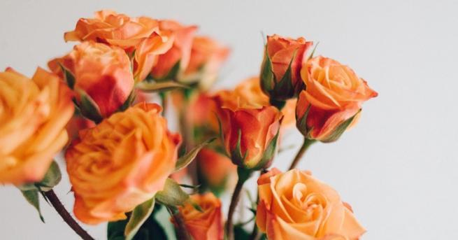 Първите сведения за розата срещаме в древните индийски предания, които