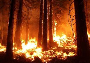 Избухна голям пожар край Петрич