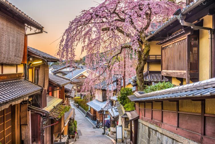 япония сакура вишни