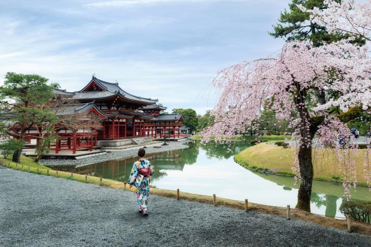 В Япония започна сезонът на цъфтежа на вишните сакура, който всяка година се посреща с голям ентусиазъм в Страната на изгряващото слънце.