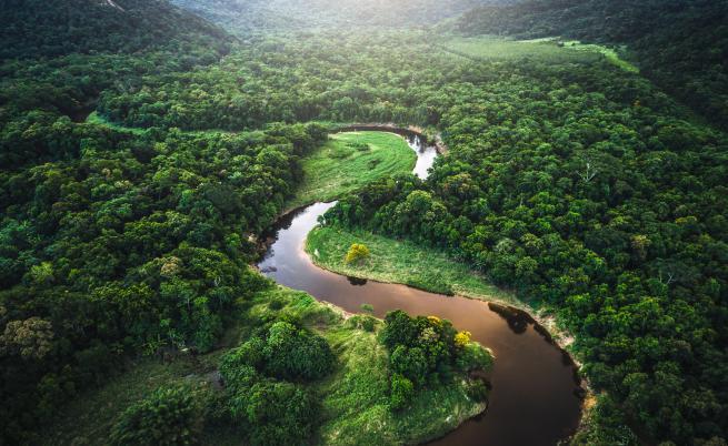 Неща, които може би не знаете за горите