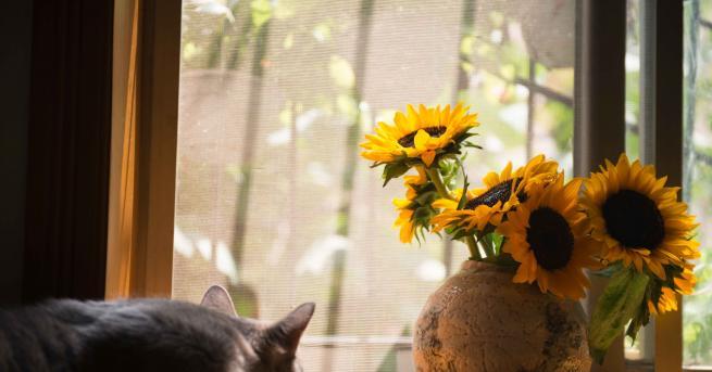 Предлагаме ви да започнете своята пролетна събота с вдъхновяваща мисъл