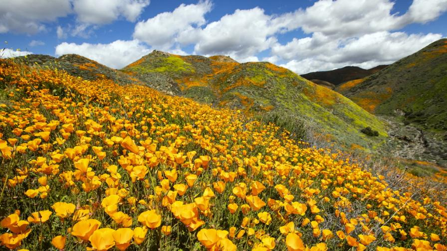 Пустиня стана цветна градина