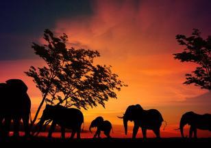 Роди се розово слонче в Африка