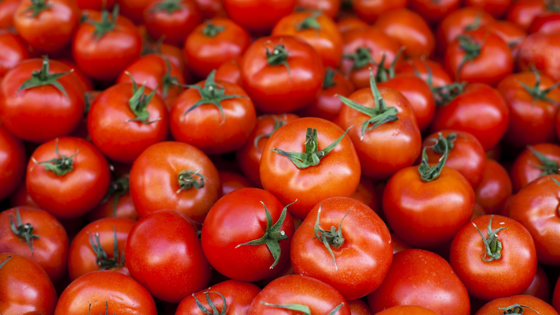домати домат