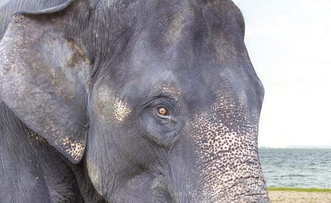 Бракониер беше убит от слон и изяден от лъвове
