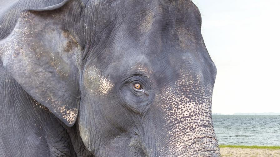 <p>Бракониер беше убит от слон и изяден от лъвове</p>