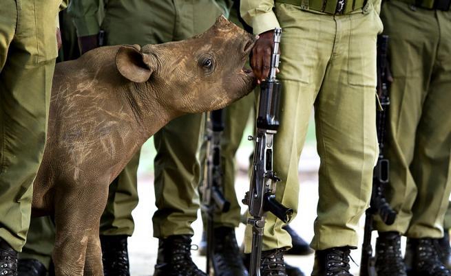 Смъртна присъда грози бракониерите в Кения