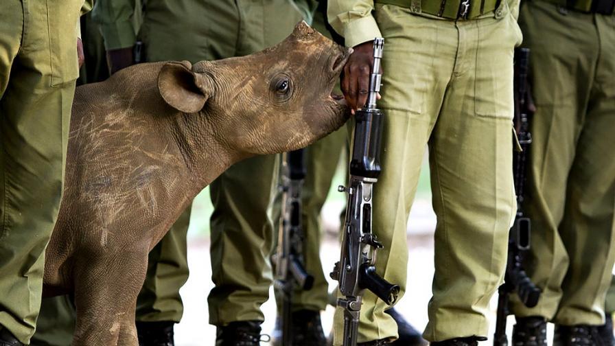 <p><strong>Смъртна присъда</strong> грози бракониерите <strong>в Кения</strong></p>