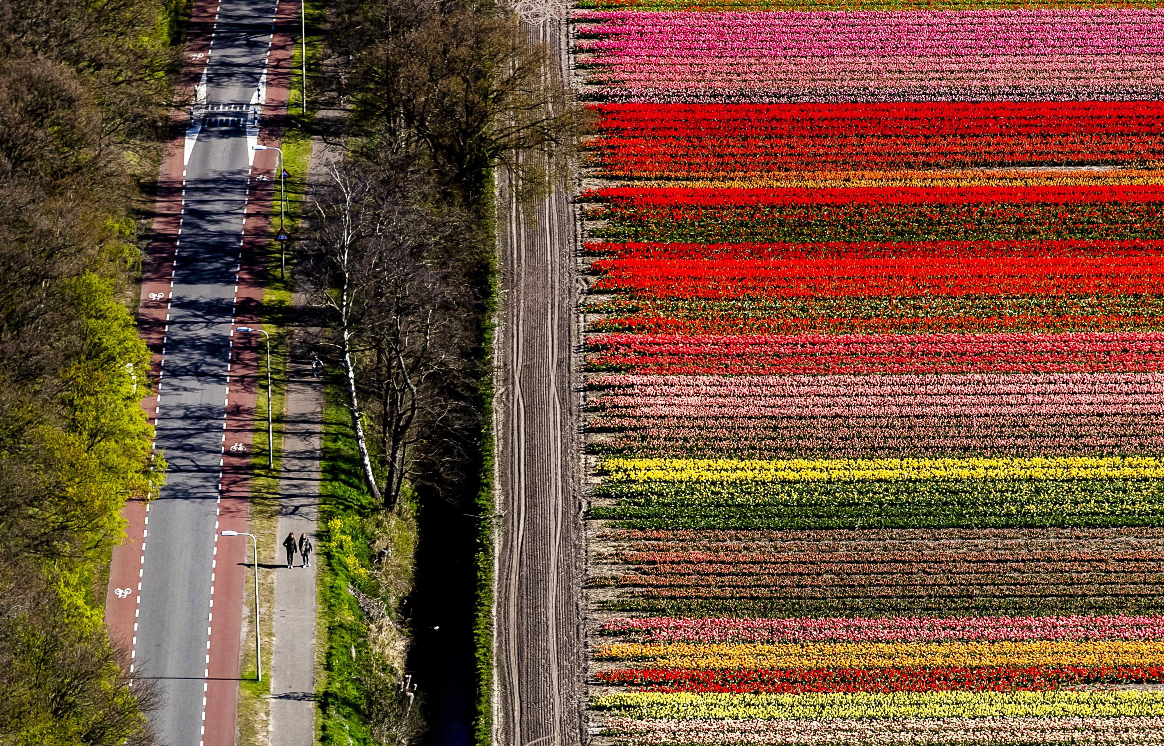 """Цветните градини """"Кукенхоф"""" (на нидерландски: Keukenhof – Кухненски двор) до град Лисе, провинция Южна Холандия, намиращ се между Амстердам и Лайден"""