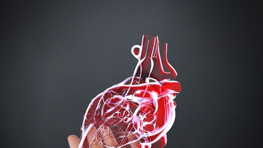 <p>Първото в света&nbsp;3D сърце с човешка тъкан и кръвоносни съдове&nbsp;</p>