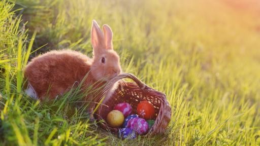 <p>Как зодиите празнуват Великден</p>