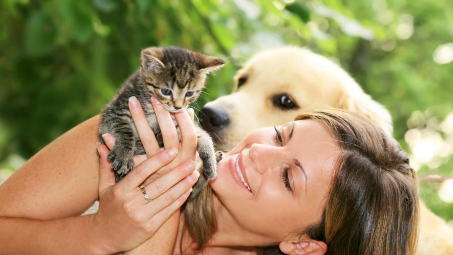 Искам да си взема куче... или пък котка